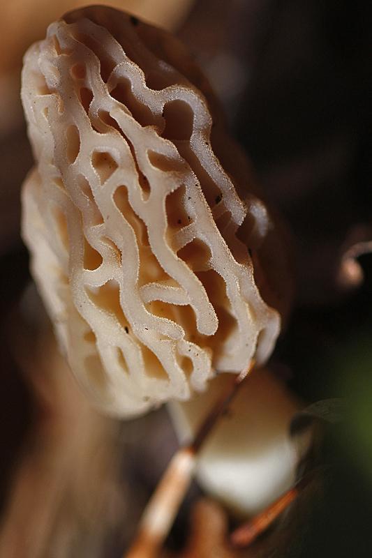 bracelet en corail
